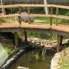 Jardin biodiversité de l'ESAT